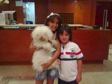 Perro Peludo en Hotel Gandia